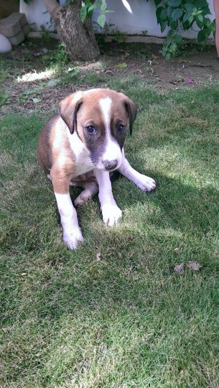 adopt puppies3