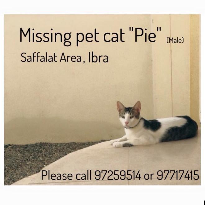 missing cat in ibra