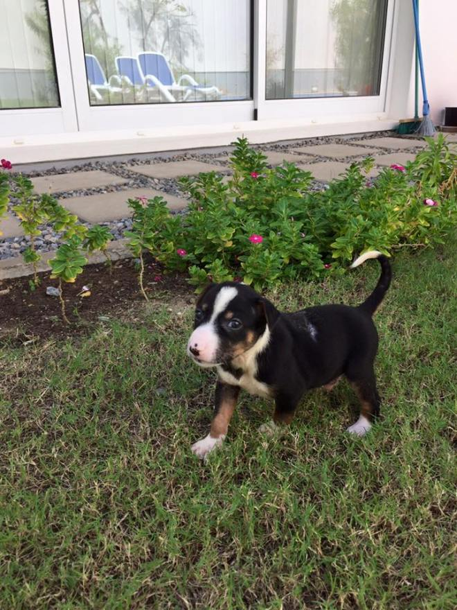 Adopt a pet in Oman