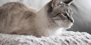 cats oman